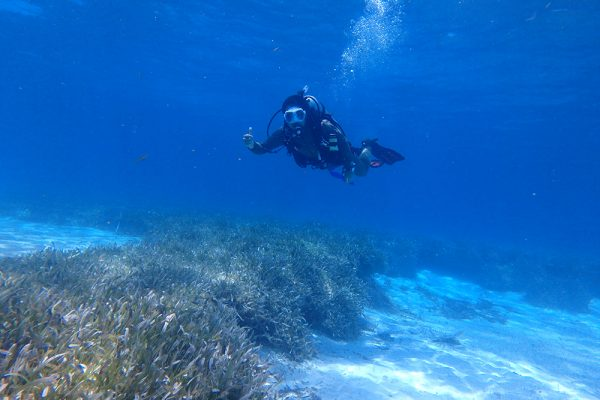 Collaboration aims to bridge seagrass conservation efforts