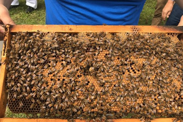 Alumni and students abuzz at Bee College