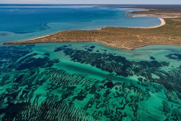 2011 heat wave still making an impact on Shark Bay