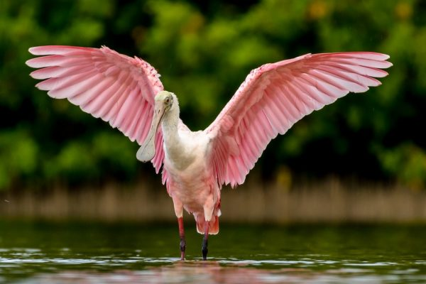 Florida Wildlife Scholarships