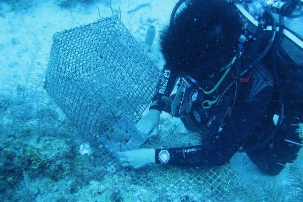 Aquarius Resurfaced: Caribbean sponge communities structured by top-down effects