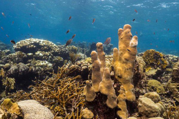 Coral reef restoration and conservation efforts
