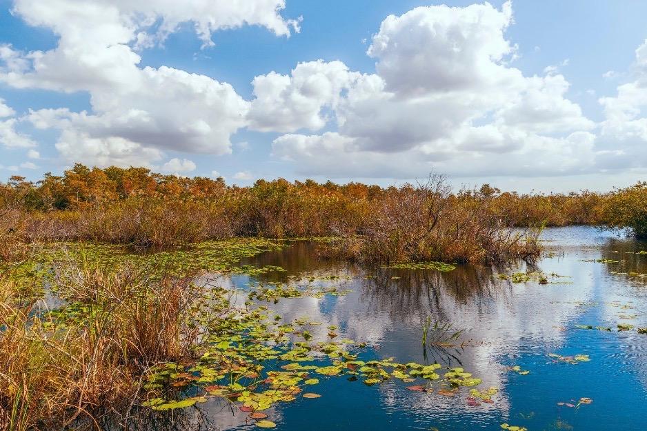 Everglades marshes
