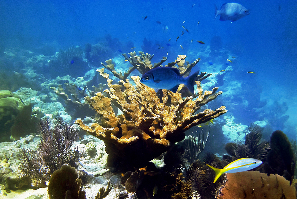 Healthy coral reef with fish