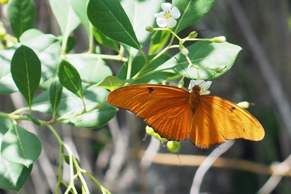 Continuing Education Course: Flora and Fauna of the Florida Keys