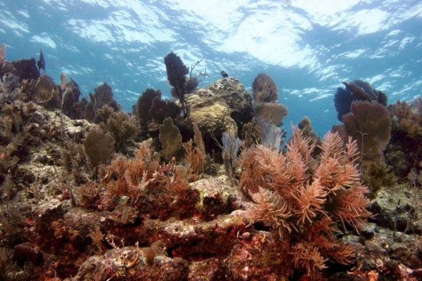 Monitor corals and disease treatments in this internship