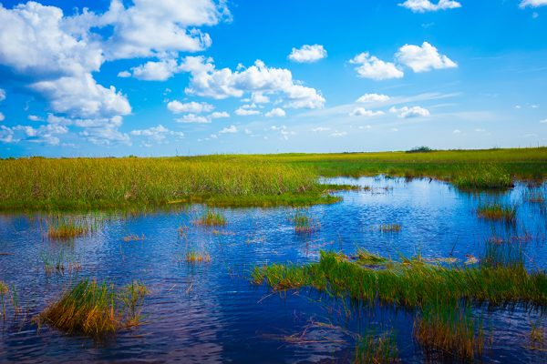 FIU Institute of Environment Coastal Ecosystems REU accepting applications