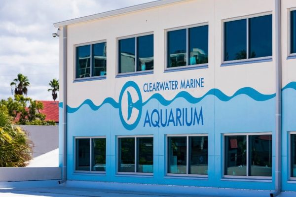 Interns wanted at Clearwater Marine Aquarium