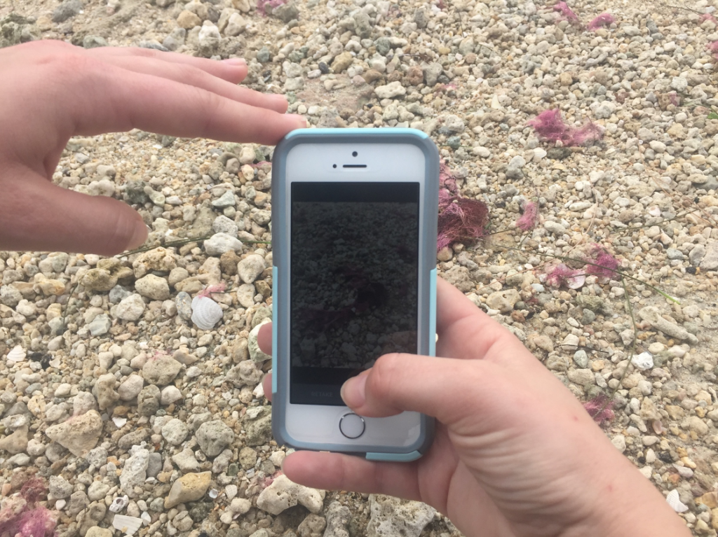 Using an iPhone to take a photo of an observation