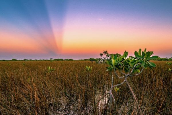2020 Everglades photo contest