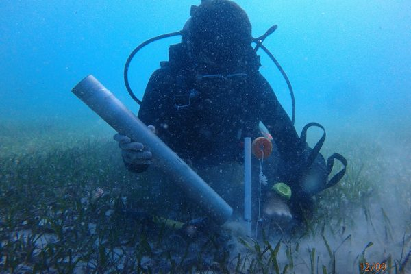 Saving seagrasses may keep carbon dioxide out of the atmosphere