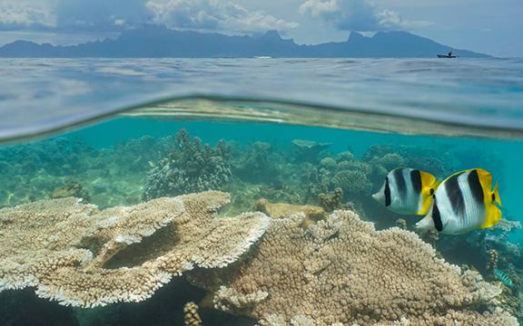 Stopping coral reef degradation