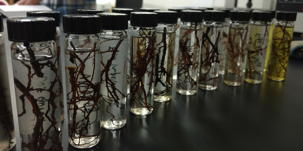 tree roots in tubes