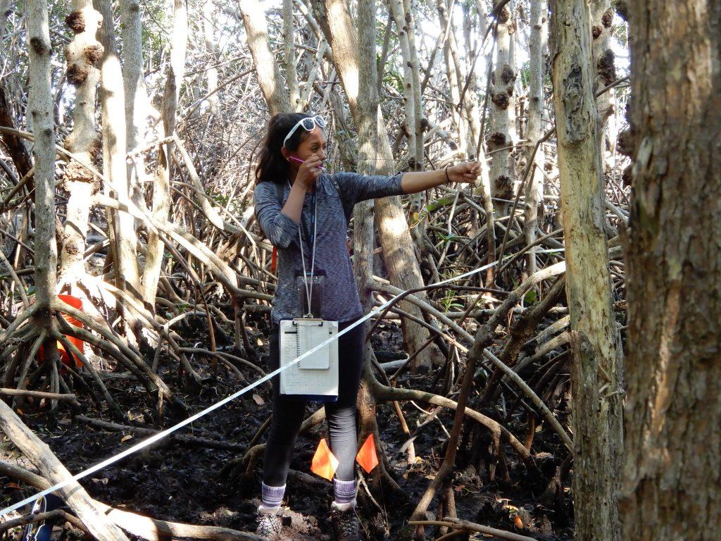plastic in the mangroves