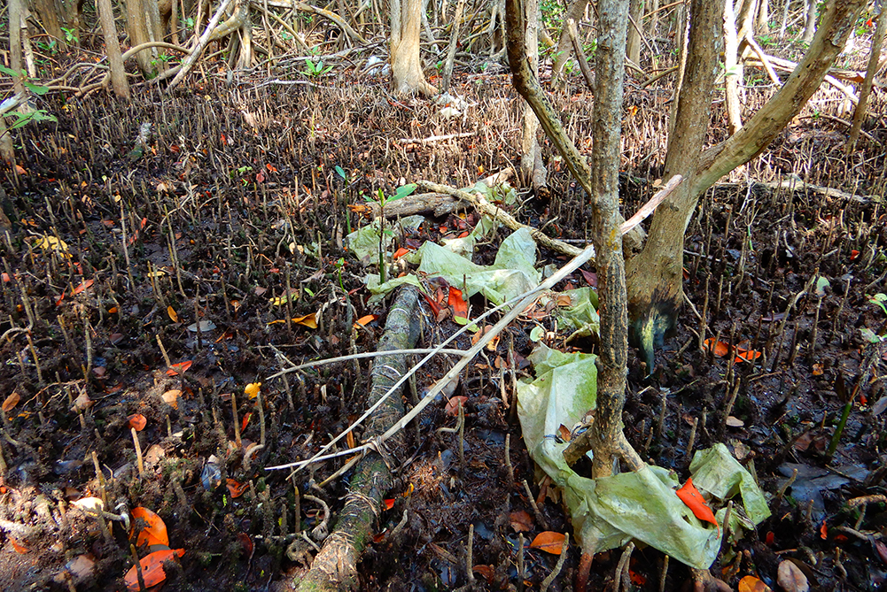 plastics in the mangroves