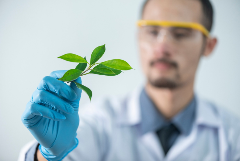 Researcher looking at plant
