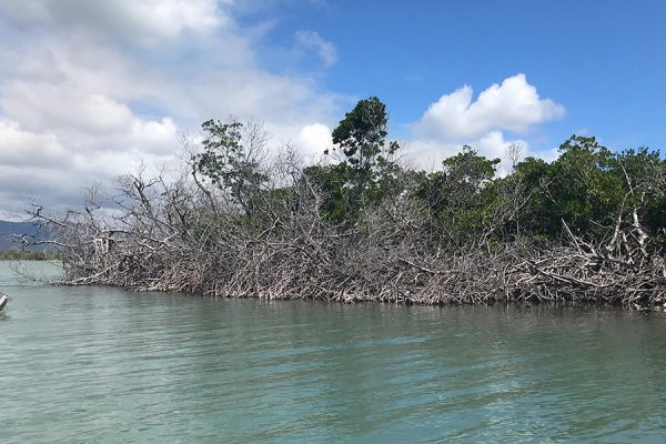 NOAA awards nearly $600,000 to mangrove resilience project