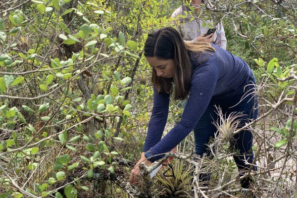 Student works to save endangered orchids with friendly fungi