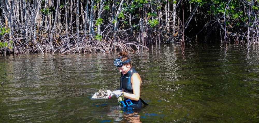 Student on field work day in Biscayne Bay