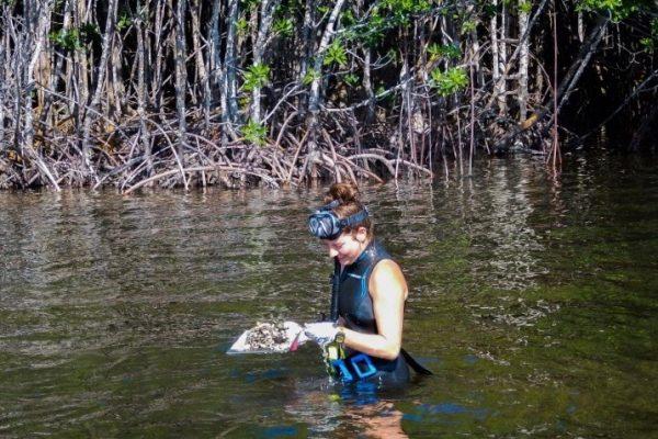 NOAA undergraduate scholarships