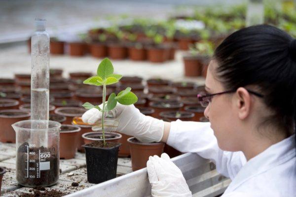 USDA seeking a curator/lead scientist