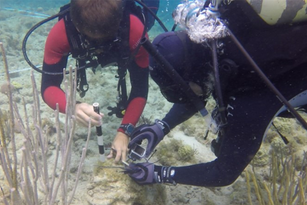 Corals have a secret weapon against a warming climate
