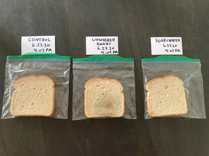 Photo of the experiment showing significant mold growth on the bread slice touched with unwashed hands.