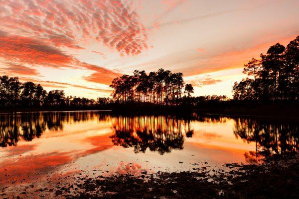 FIU CASE Everglades photo contest