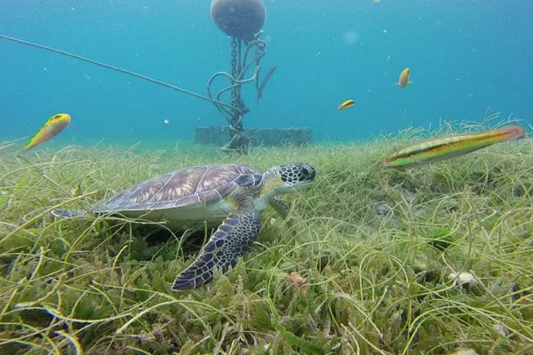 FIU@Home: Explore hurricane impacts on sea turtle behaviors