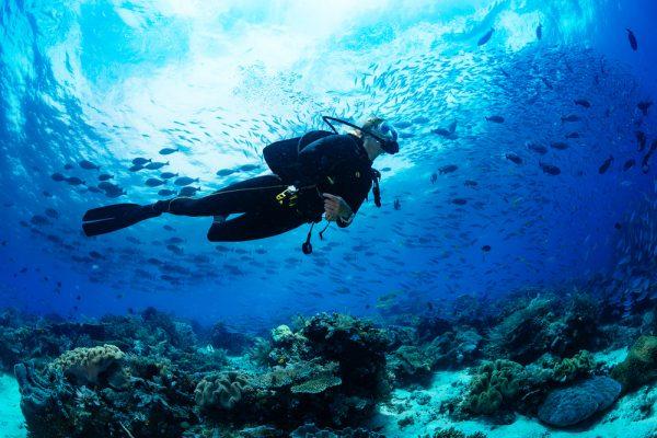 2021 Aspiring Marine Scientist Scholarship