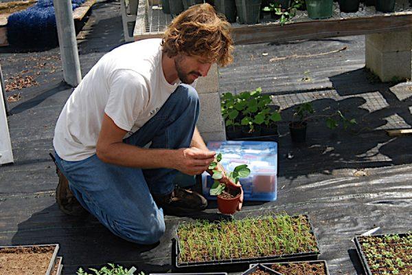Agroecology program seeks program coordinator