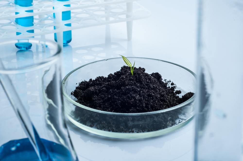 soil in petri dish