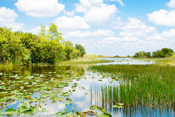 FIU experts available to discuss Everglades Restoration