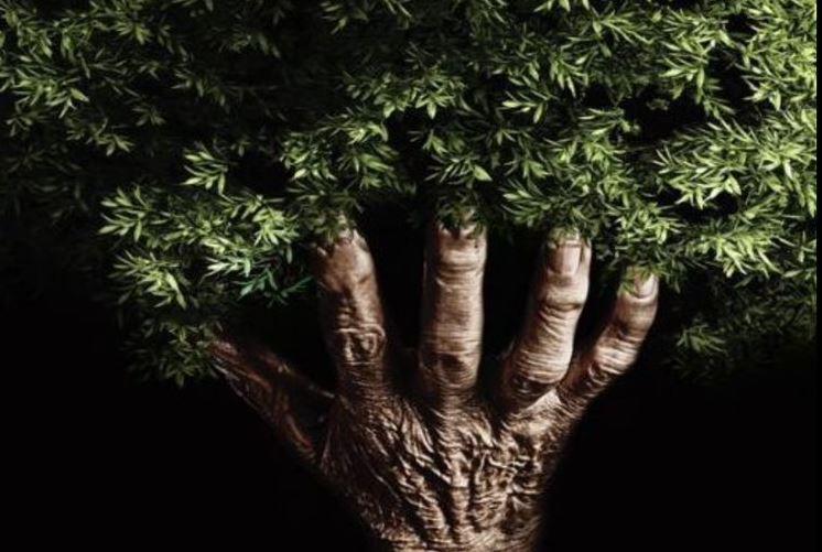 Hand holding greenery