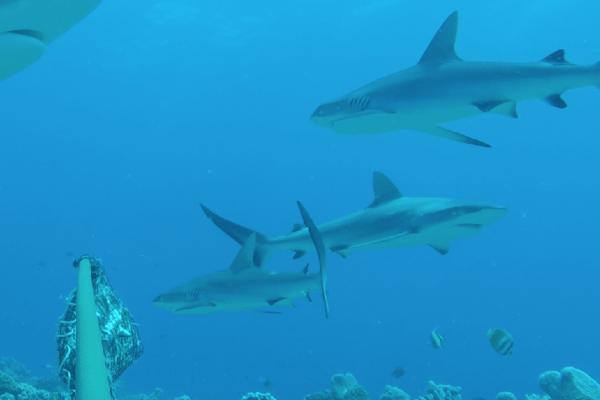 FIU shark experts list
