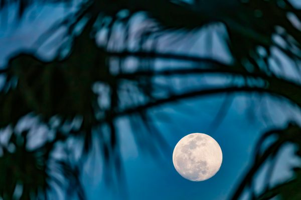 FIU@Home: Discover the super flower blood moon lunar eclipse