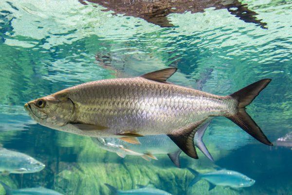 Bonefish & Tarpon Trust seeking field technician