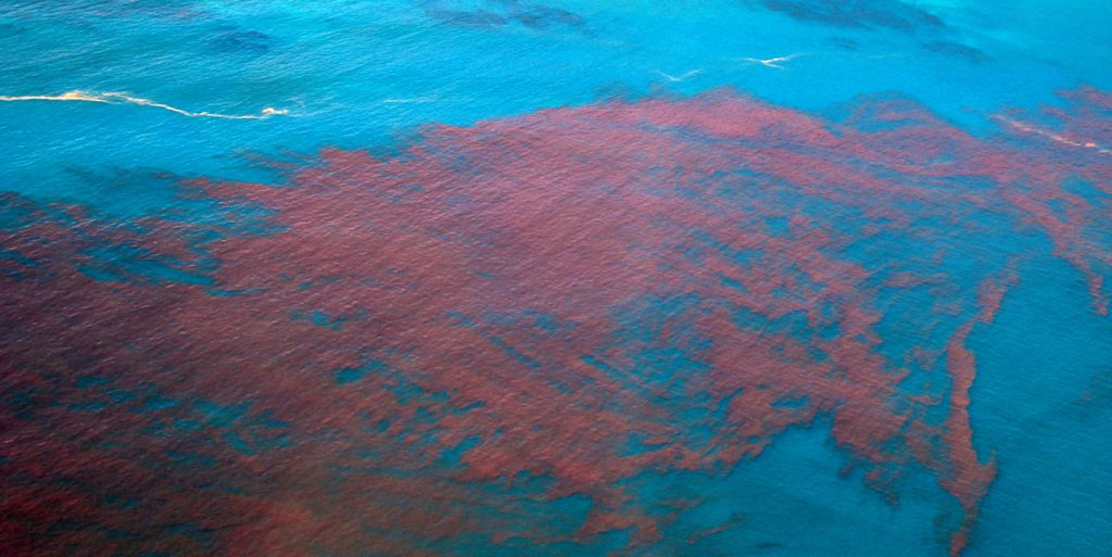 red tide atlantic ocean