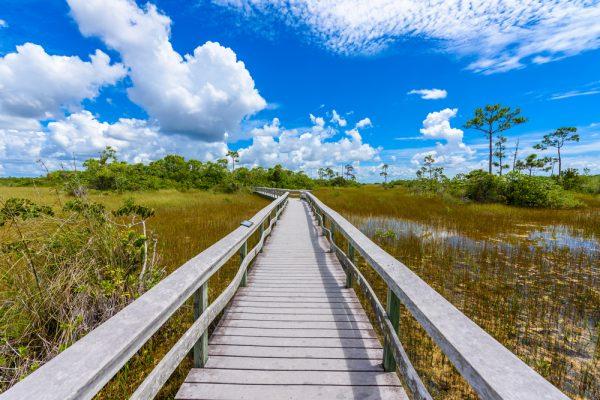 FIU@Home: Explore Everglades stories