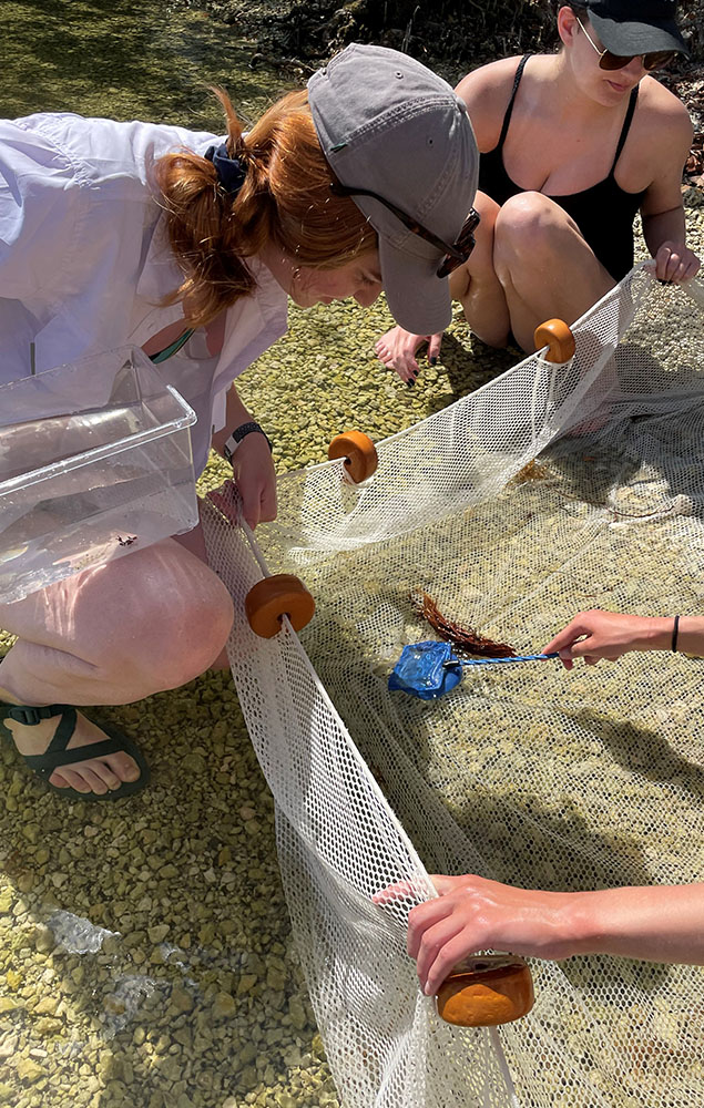 Students participating in a beach seine.