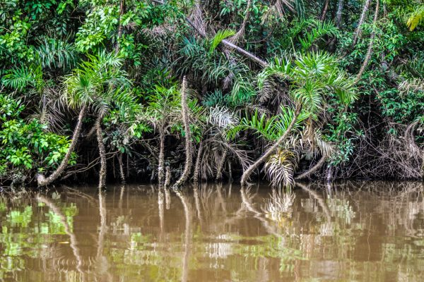 Dominant tree species drives beta diversity patterns