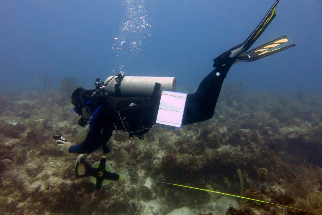 Diver lays a transect