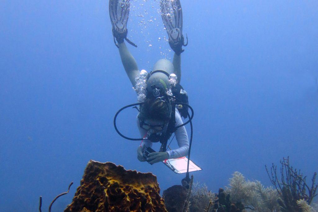 Diver takes underwater photos
