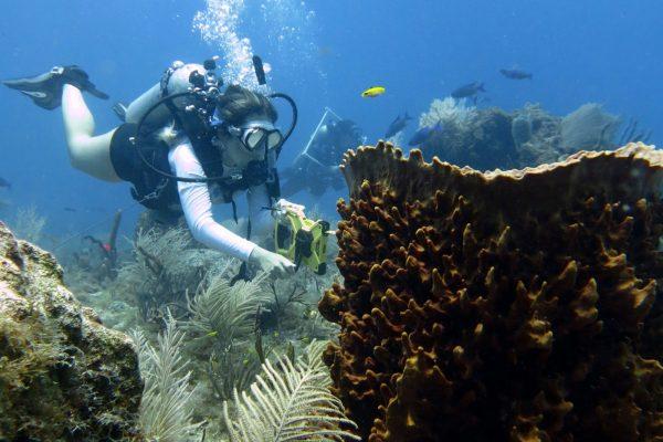 Medina Aquarius Program offers Fundamentals of Scientific Diving