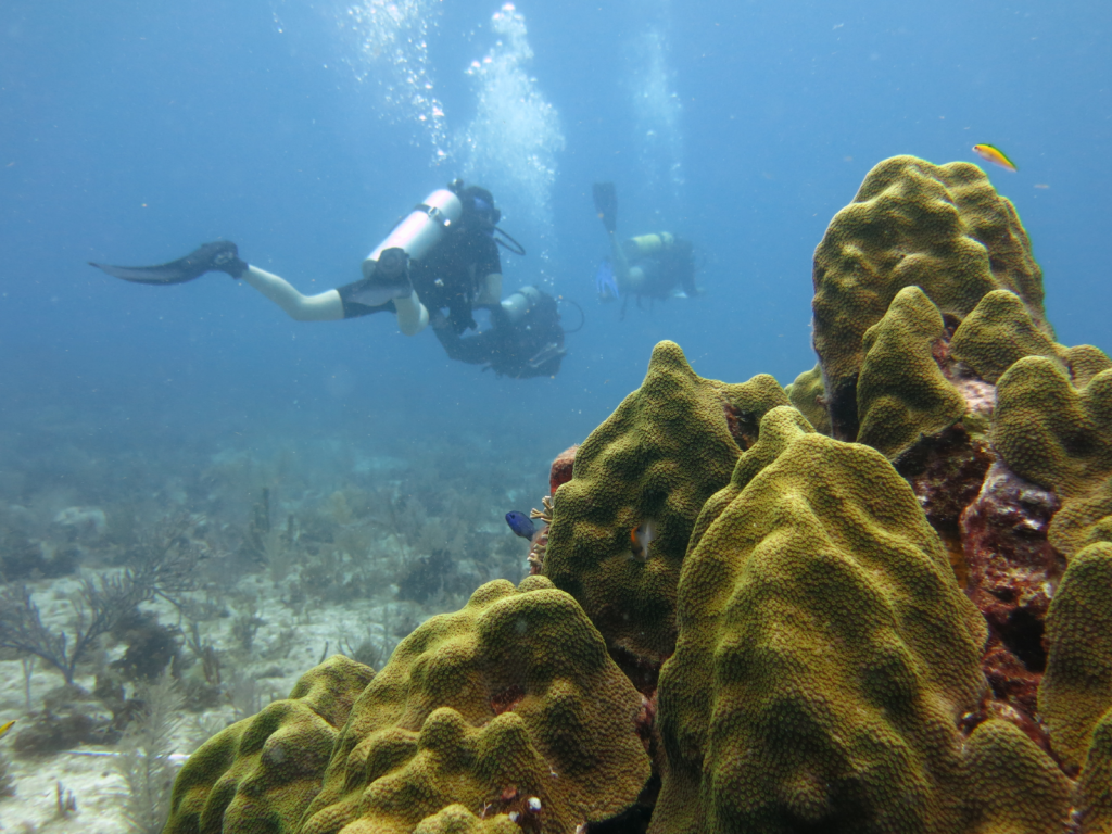 Three students dive the reefs of the Florida Keys