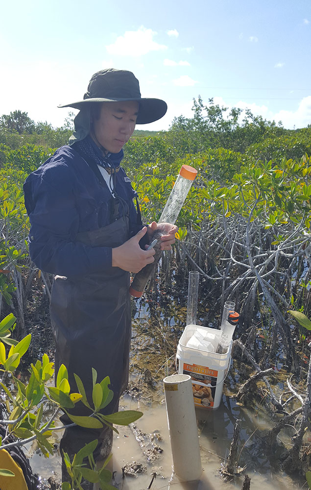 Wong collecting soil cores in mangrove ecosystem