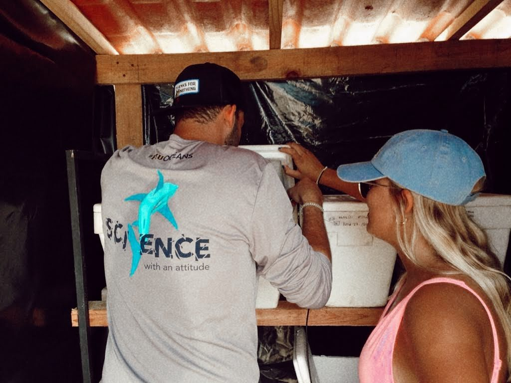 Figueredo and Bisbe-Ochoa observe eggs in Styrofoam boxes.
