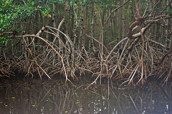 Student studies water's flow for mangrove restoration
