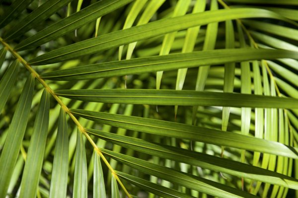 Florida Native Plant Society seeks executive director