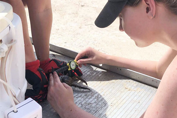REU student studies crabs' potential to save corals